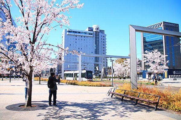 富山駅前の桜