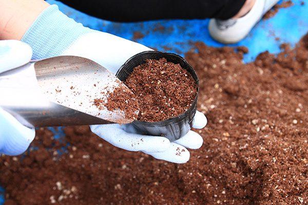 ポットに土を入れていきます。