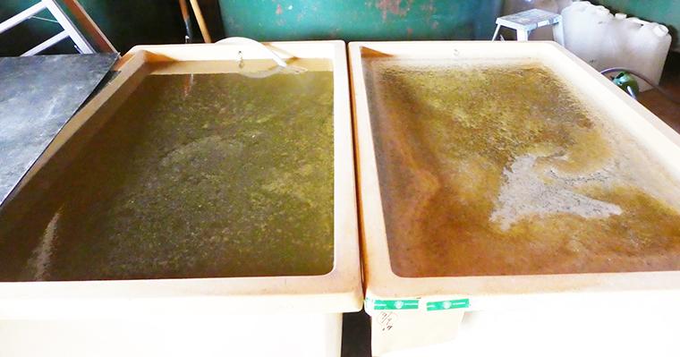 桶に移したへちまの里のへちま水